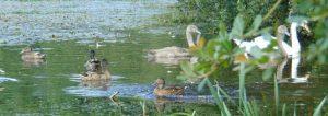 Kingstown Wildlife Pond