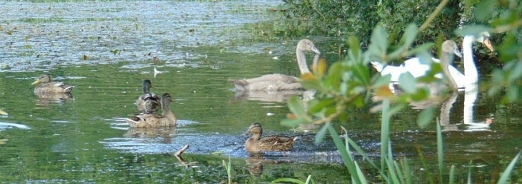 Kingstown Wildlife Pond